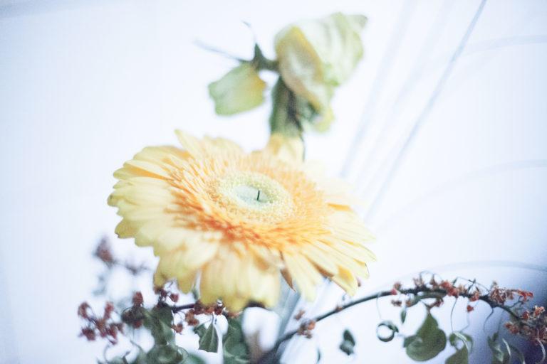 Sonnenblume bei der Paartherapie