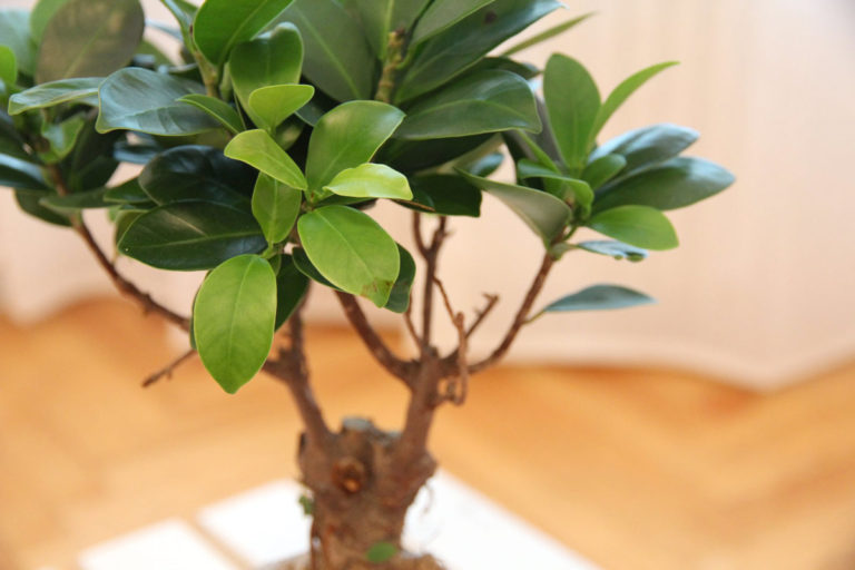Pflanze im Behandlungsraum