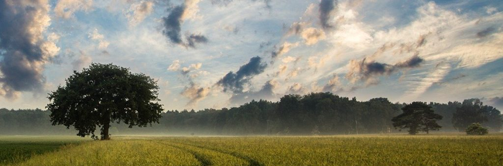 Bild für Blogbeitrag: Ein einsamer Baum
